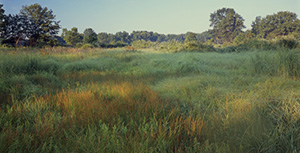 Morning sun lights up the grasses and scattered trees of Hoosier Prairie Nature Preserve, northern Indiana